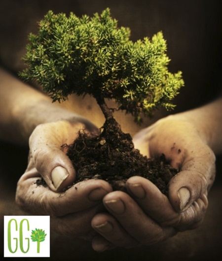 Green Gestures, tree, plant a tree, Arbor Foundation, one blog one tree, green, carbon neutral, carbon footprint,